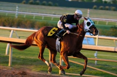 A CEO is like a jockey guiding a thoroughbred